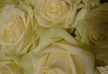 Florale Art & Design - Sonja Ruhland